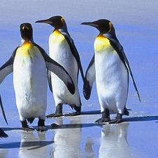 Animales extintos y en peligro de extincion