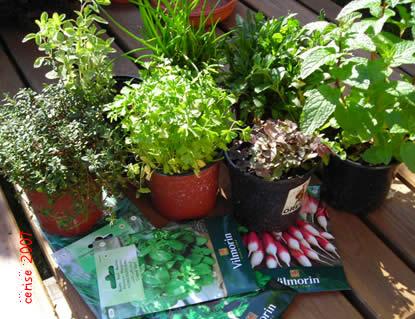 http://cms7.blogia.com/blogs/c/ce/cer/cerise/upload/20070225190459-plantas.jpg