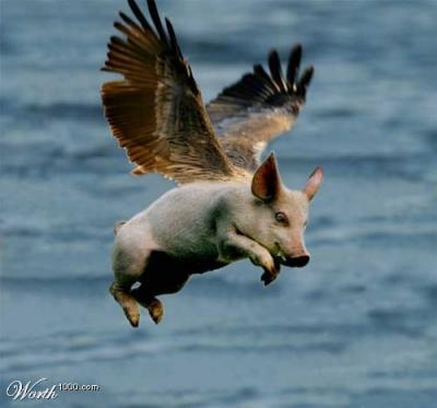 animales voladores