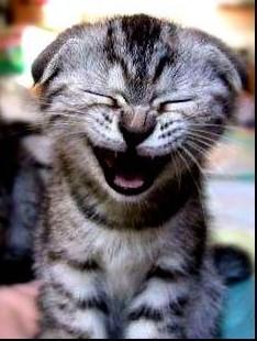 Responde al de arriba con énfasis - Página 2 20091022035645-risa-cat