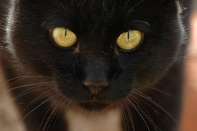 Registros de Patronus 20080311134952-gato-negro-bueno